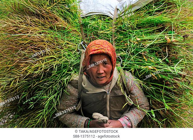 Woman carrying grass on her back