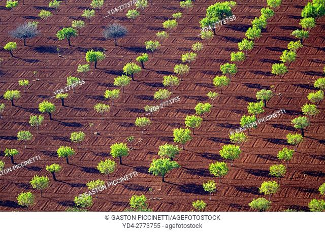 Aerial view of fields, Mallorca field, Balearic Islands, Spain