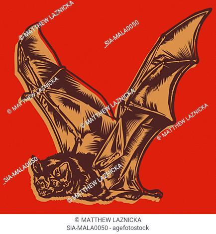 Flying bat on red