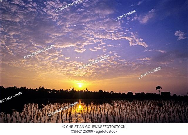 paddy fields at sunset, Lombok island, Lesser Sunda Islands, Republic of Indonesia, Southeast Asia and Oceania