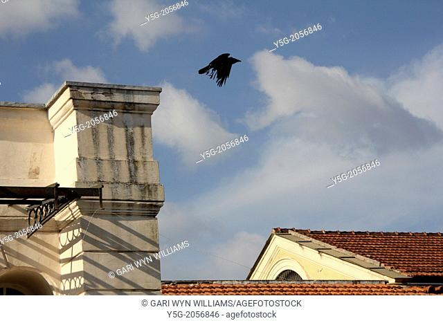 bird flying above roofs in the testaccio area in rome italy