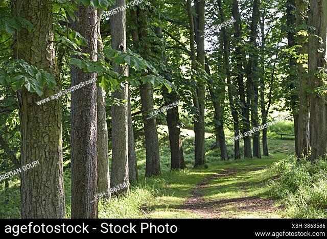 Allee bordee de marroniers, Parc du Chateau de Nogent-le-Roi, Departement d'Eure-et-Loir, region Centre-Val-de-Loire, France