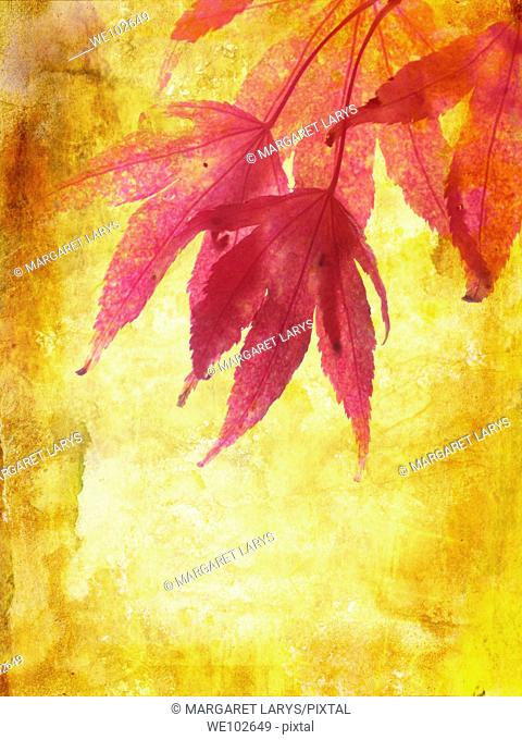 Beautiful autumn, grungy background with maple leaves