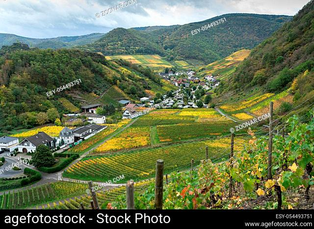 On the red wine hiking trail in the Ahrtal in Rhineland-Palatinate, Germany. A tourist attraction, especially in autumn