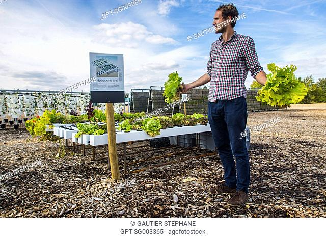 ALEXIS LEFEBVRE, HEAD OF THE URBAN AGRICULTURE PROJECTS, THE FERME DE GALLY, HYDROPONIC GROWING OF LETTUCE, EXPERIMENTAL FARMING PARCEL