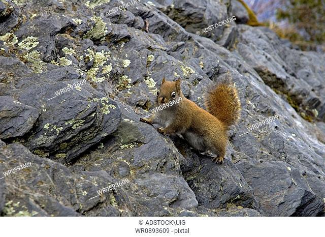 Squirrel at The Chimneys, Great Smoky Mtns Nat. Park, TN