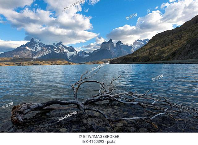 Dead tree in the water, Lago Pehoe and Cuernos del Paine, Torres del Paine National Park, Chilean Patagonia, Chile