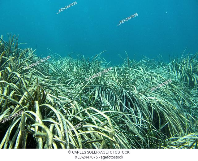 Sea floor. Balearic Islands, Spain