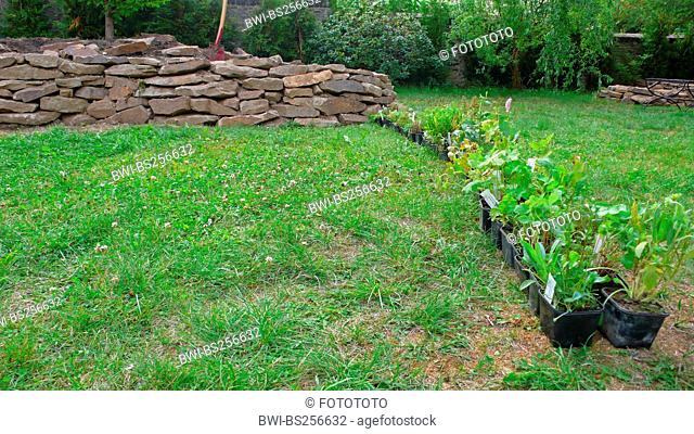 row of plants in plastic pots standing in meadow in front of rock garden