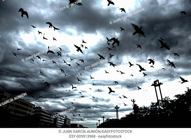 many flying pigeons on city cloudy sky background