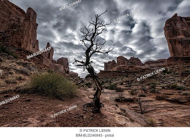Barren tree in desert under clouds
