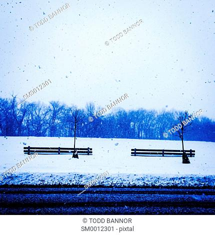 Park benches, trees and falling snow. Columbus Park, Chicago, Illinois