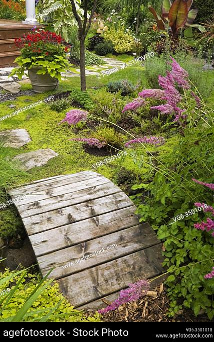 Pink Astilbes next to a wooden footbridge and flagstone path leading to a planter with red Pelargonium - Geraniums and Ipomoea batatas Morning Glory in backyard...