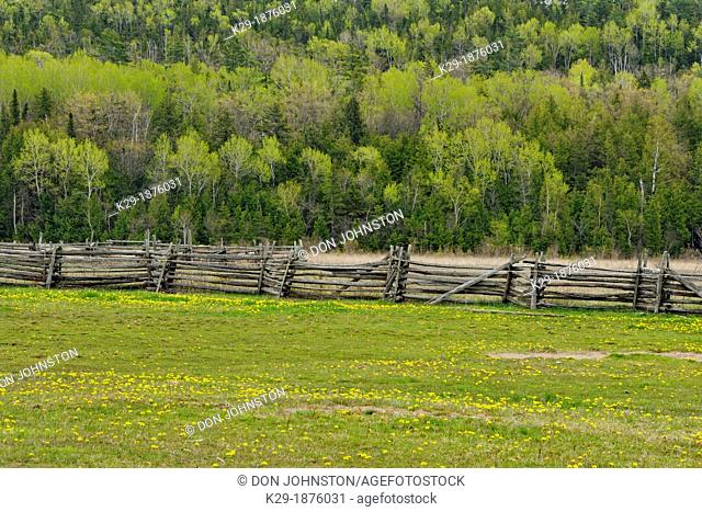 Pasture with dandelions and fences, Manitoulin Island- near Bowser's Corner, Ontario, Canada