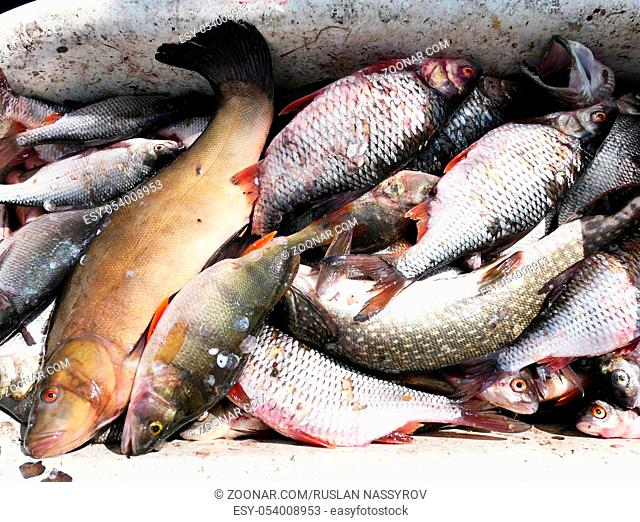 Pile of fresh fish