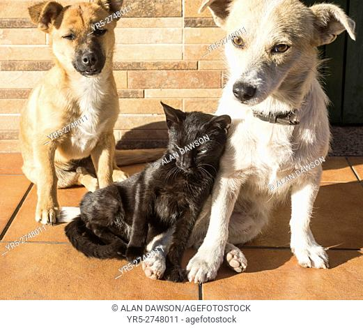 Cat and dogs together outside bar in mountain village on Gran Canaria, Canary Islands, Spain