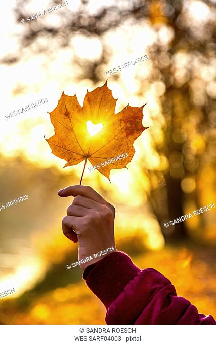 Girl's hand holding autumn leaf with heart-shaped hole at sunset