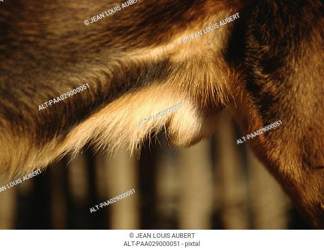 Dog's hindquarters