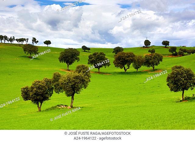 Spain , Castilla La Mancha Region , Guadalajara Province, landscape