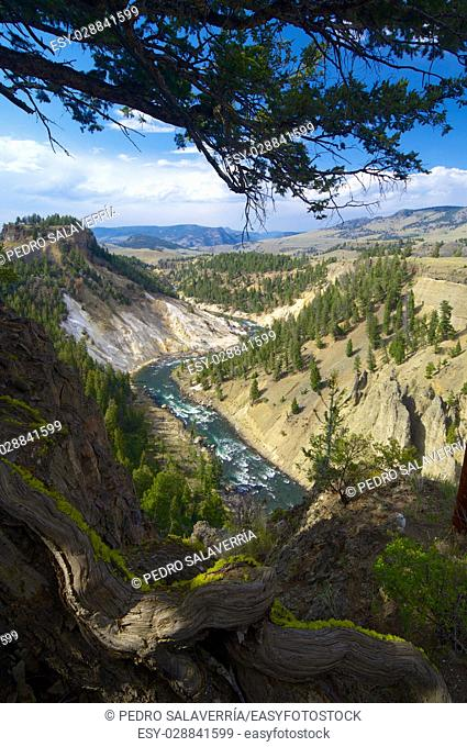 Yellowstone river in Tower Roosevelt Area, Yellowstone National Park, United States