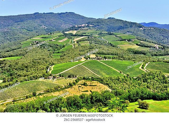 Landscape of Tuscan vineyards near Radda in Chianti, Tuscany, Italy