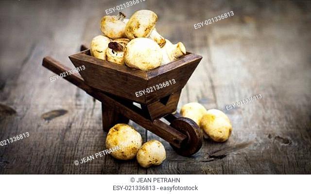 Fresh Muschrooms in a miniature wheelbarrow