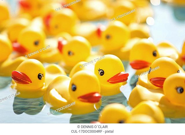 Many rubber ducks floating in pool
