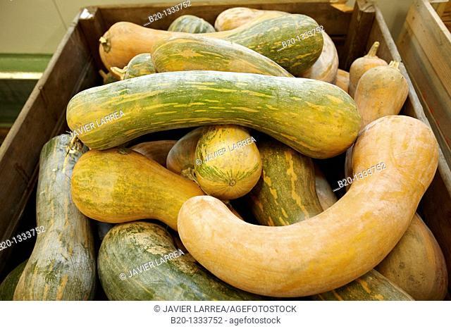Squashes, Mercabilbao fruits and vegetables wholesale market, Basauri, Bilbao, Bizkaia, Euskadi, Spain