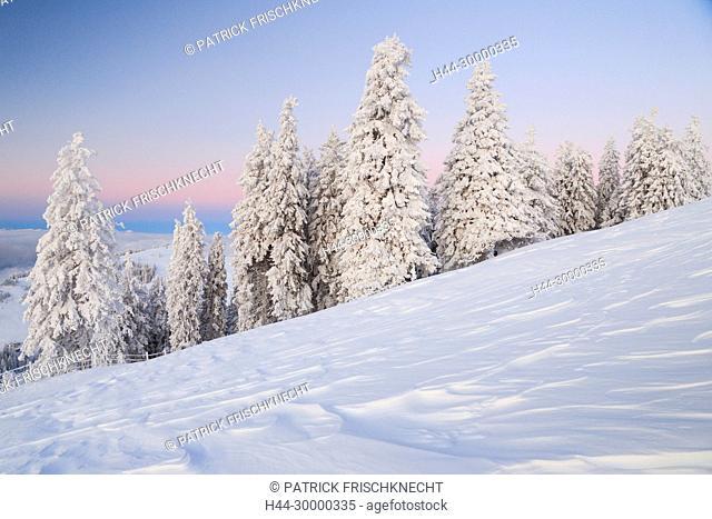 Verschneite Tannenbäume, Schweiz