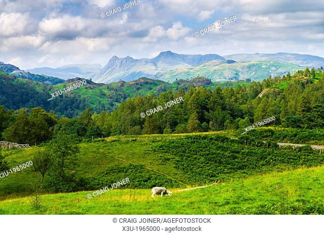 Summer view of Holme Fell and the Langdale Pikes near Coniston in the Lake District, Cumbria, England