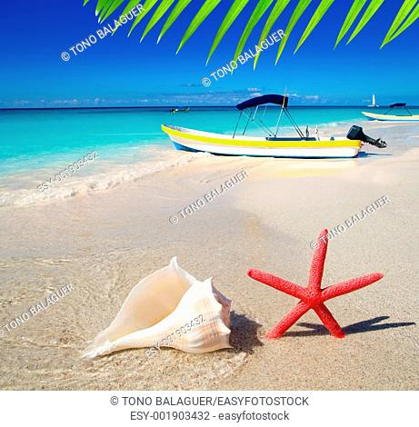 beach starfish and seashell with tropical boat in turquoise sea