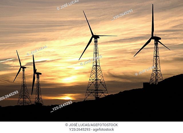 Wind plant, Tarifa, Cadiz province, Region of Andalusia, Spain, Europe