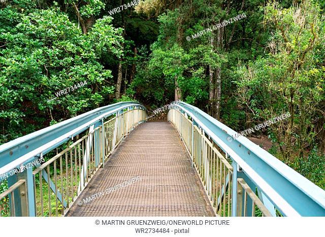 New Zealand, Northland, Glenbervie, Djungle bridges at the Whangarei waterfalls