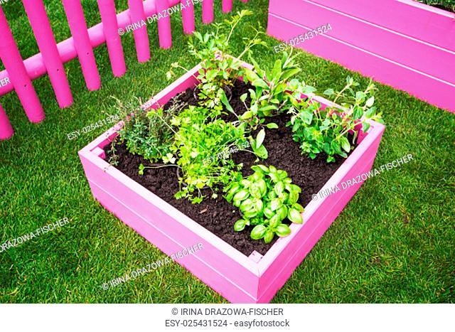 Small Raised Herb Stock Photos And Images Agefotostock