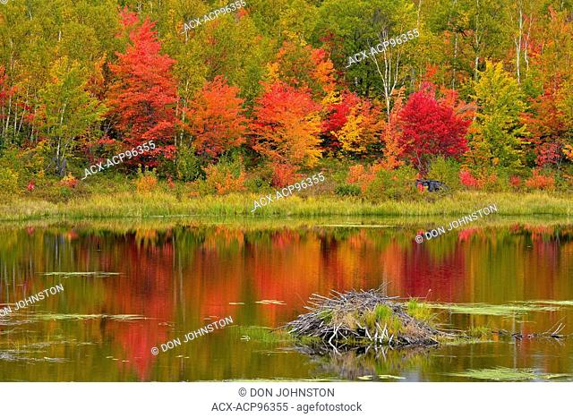 Autumn foliage in a mixed hardwood forest reflected in a beaverpond, Greater Sudbury, Ontario, Canada
