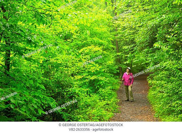 Hawk Falls Trail, Hickory Run State Park, Pennsylvania
