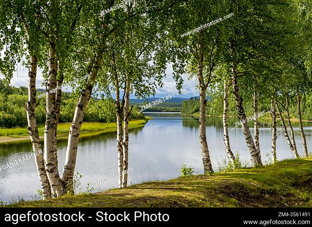 View of Ivalo River in Ivalo, a village in Inari, Lapland, in northern Finland with Birch trees in foreground