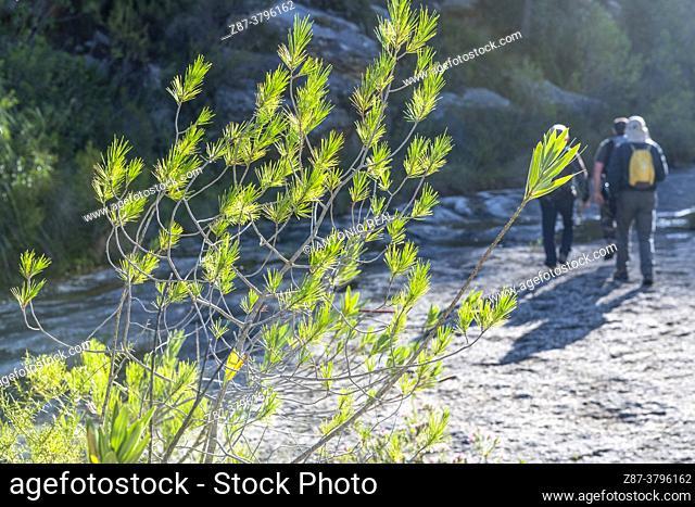 Hikers. Route of the Barranco Moreno. Massif of the Caroche. Bicorp. Valencia
