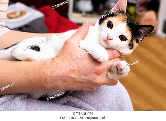 Little kitten lies on a lap and clings to arms