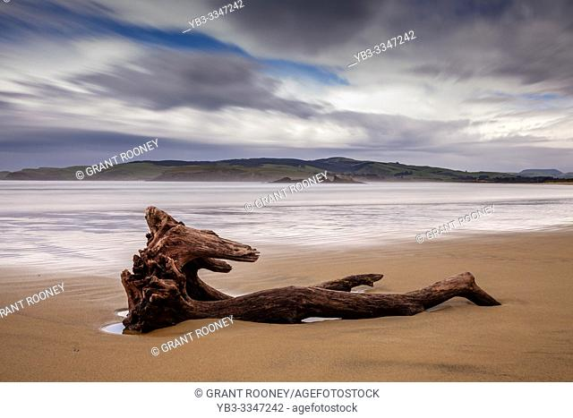 Driftwood At Surat Bay, The Catlins, South Island, New Zealand