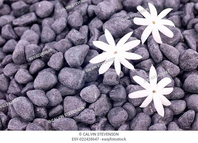 White jasmine flowers over zen stones background