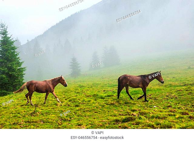 Two wild running horses on the misty field
