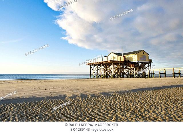 Beach house on the North Sea in the spring, St. Peter-Ording, Schleswig-Holstein, Germany, Europe