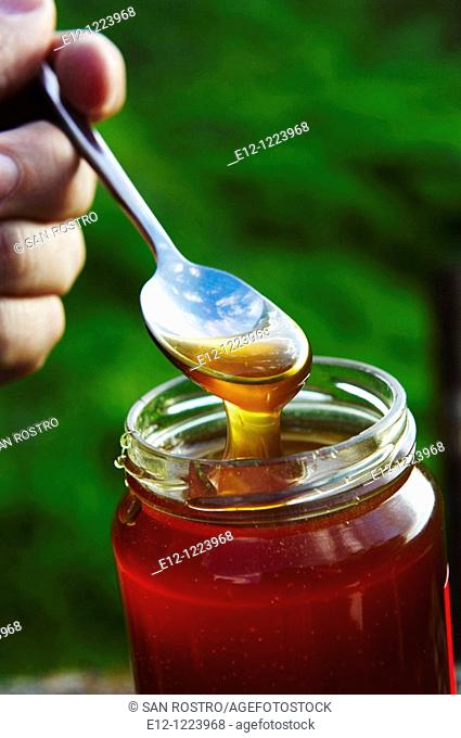 Chestnut honey, Romain Salsca honey producer, Peri, South Corsica, Corsica, France