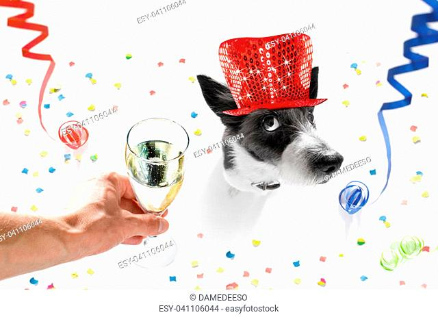 poodle dog celebrating new years eve with owner and champagne glass isolated on white background , serpentine streamers and confetti