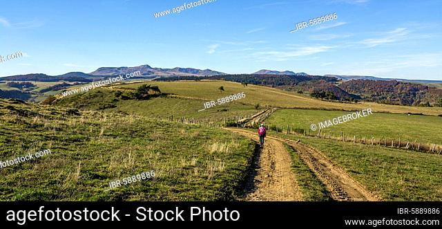 Walker and the Sancy massif at back, Sancy massif, Auvergne Volcanoes Natural Park, Puy de Dome department, Auvergne-Rhone-Alpes, France, Europe