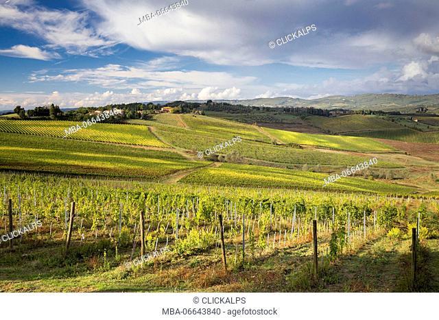 Vineyards in autumn dress near Vagliagli. Vagliagli, Castelnuovo Berardenga, Chianti, Siena province, Tuscany, Italy, Europe