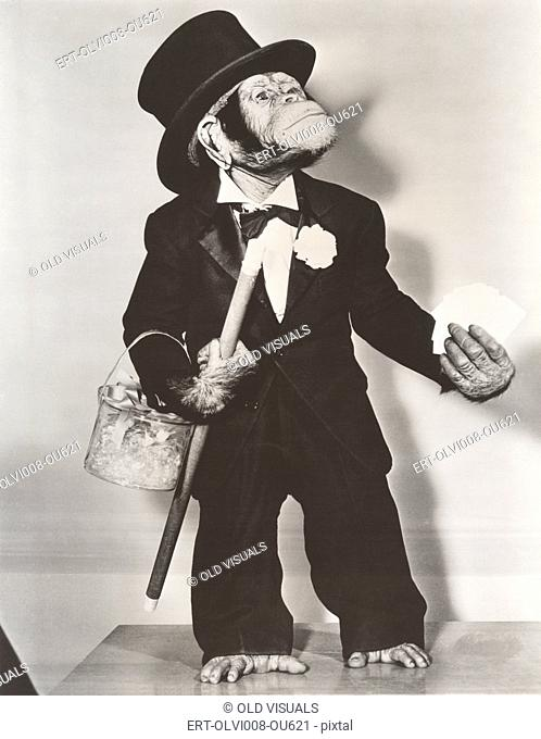 Monkey dressed as a groom