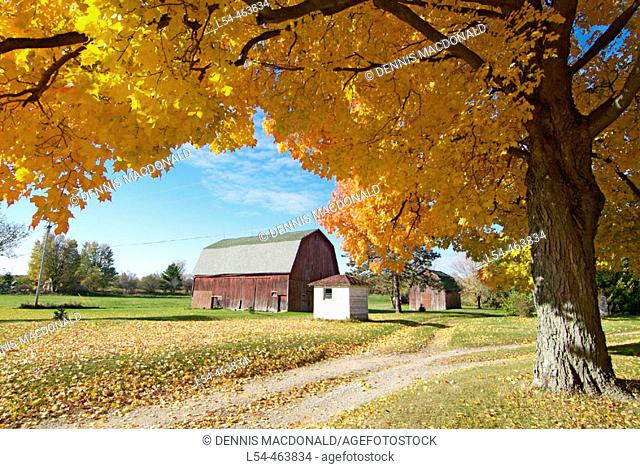 Northern Indiana, 5 miles southeast of the small city of Elkhart, agriculture farming scene during the autumn fall colors