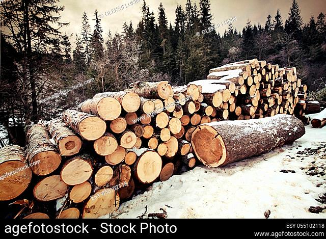Pile of logs in the winter forest to sawmill